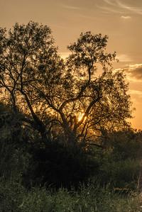 Sunrise - Schertz, TX