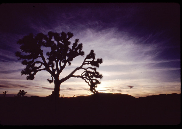 Sunset in Joshua Tree National Park.