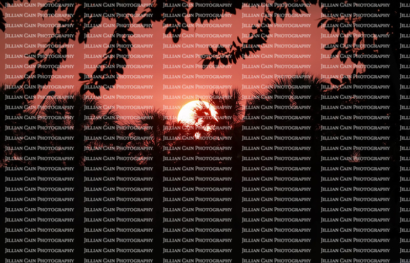 Dramatic red sunset as seen through a tropical garden in Florida.