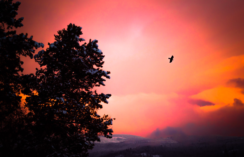 Crow In A Sunset Sky