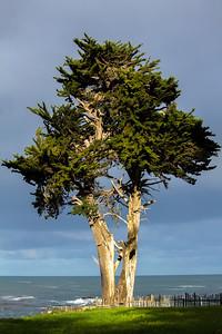 Whaler's Cottage Cypress