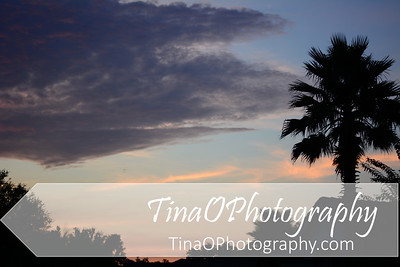 Florida Sunrise with Palm Tree