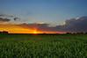 Verdant Spring Sunset
