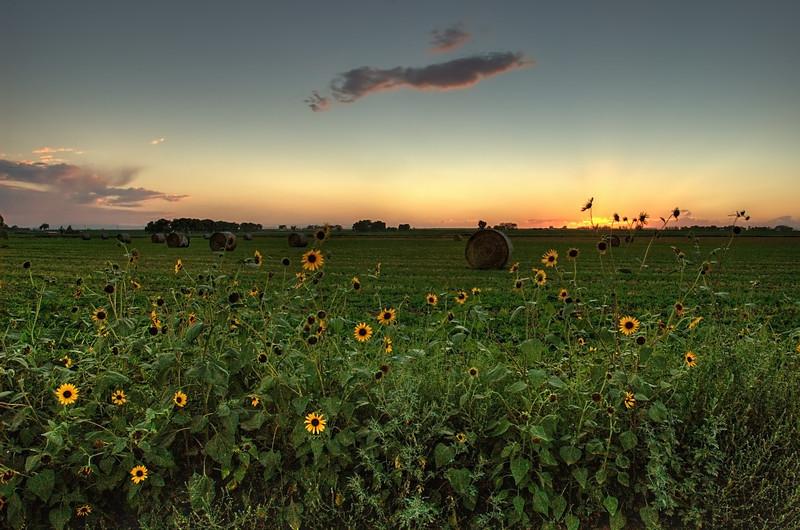 Sunflower-set