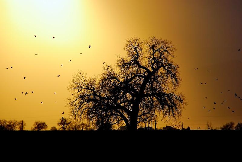 The Farmer's Tree of Life
