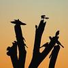 An Avian Gathering Greets the Morning Sun