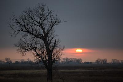 Quiet Tree