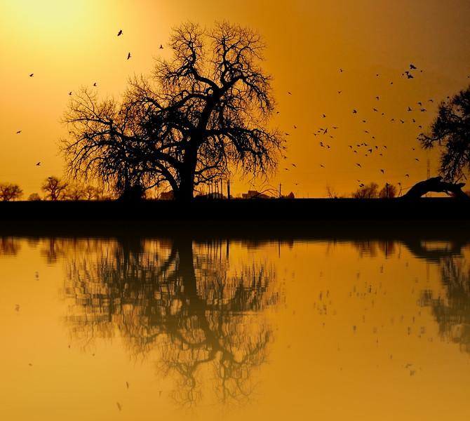 Cottonwood on Fake Golden Pond