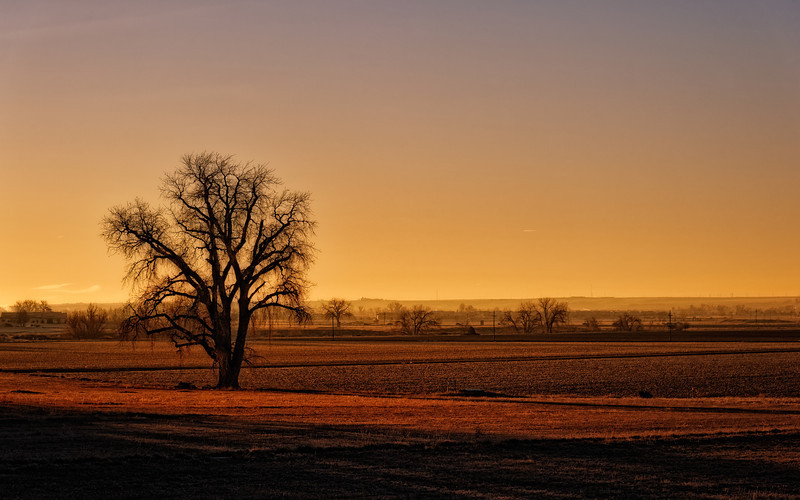 First Light Gold on a Gorgeous Tree