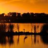 Quivira sunset_515226