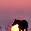 horse with sun not spot_454640