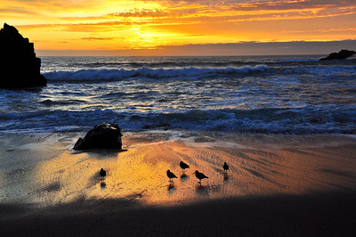 birds-beach-sunset-2