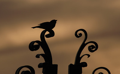 Silhouette of a little bird sitting on the wrought iron gates of the WWII Memorial  (Natatorium) on the ocean in Waikiki  Oahu, Hawaii