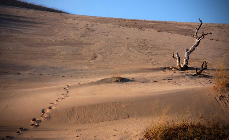 The Dune Climb