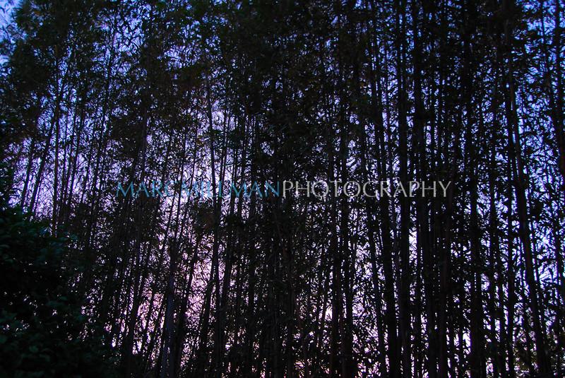 Bamboo (Sun 5 30 10)