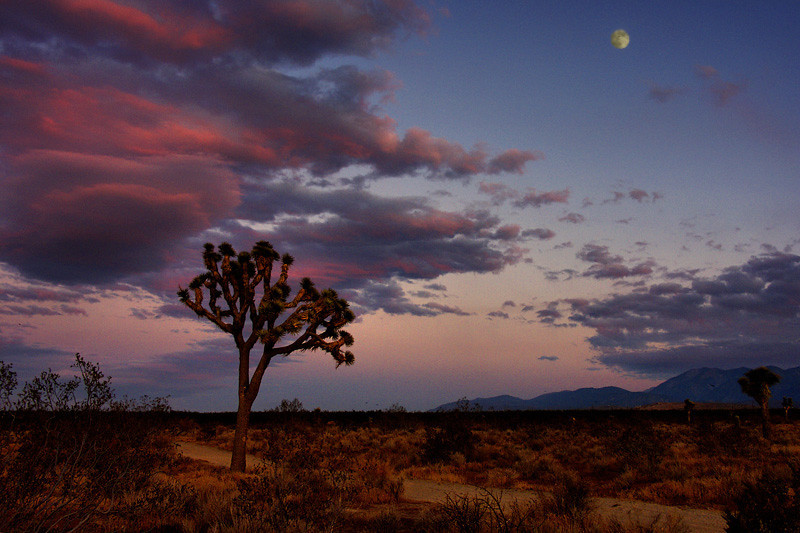 Moonrise over the Mojave