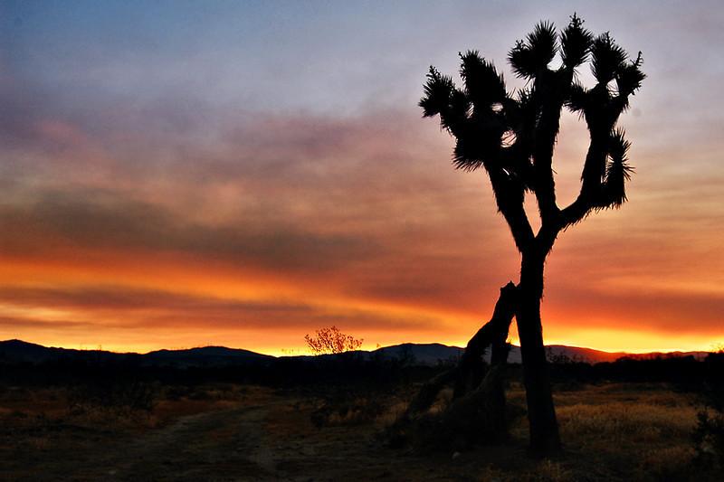 Littlerock Sunset #1