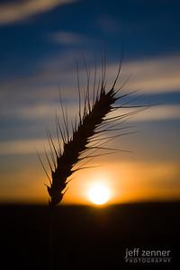 Grain Sunset