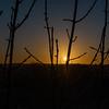 Sunrise in the Sticks