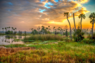 Early morning at Orlando Wetlands Park