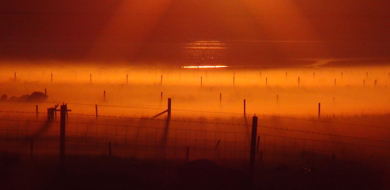 Fence posts in the afterglow