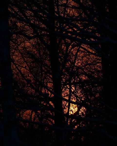 Forrest Sunset