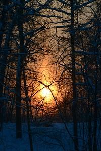 Blazing Backyard Sunset