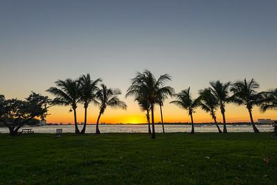 Palms & Sunset