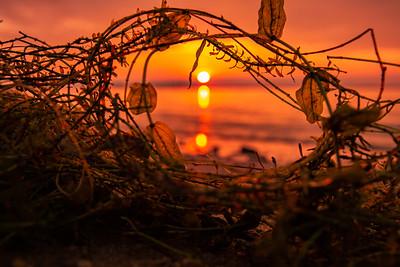 """""""Serene Seaweed"""""""