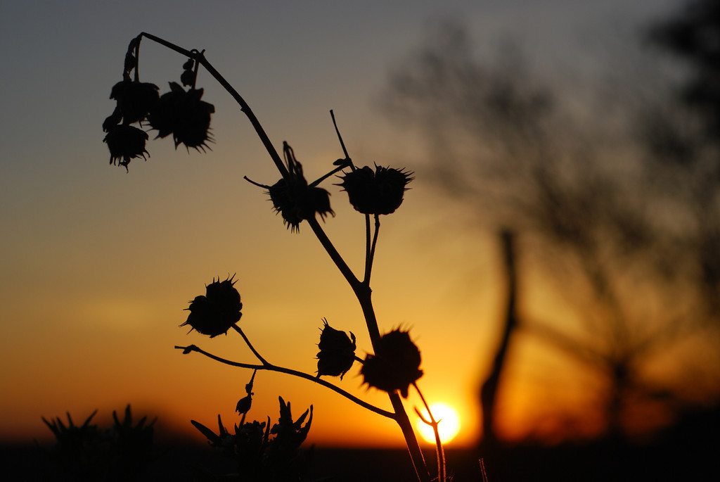 Even weeds can be pretty, in the right light.