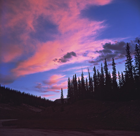Sunset behind trees highway in Colorado