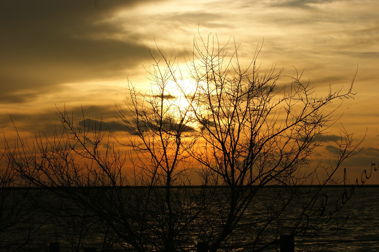 Photo By Robert Bodnar...........Sunset,  seen Through a Tree on Lake Erie