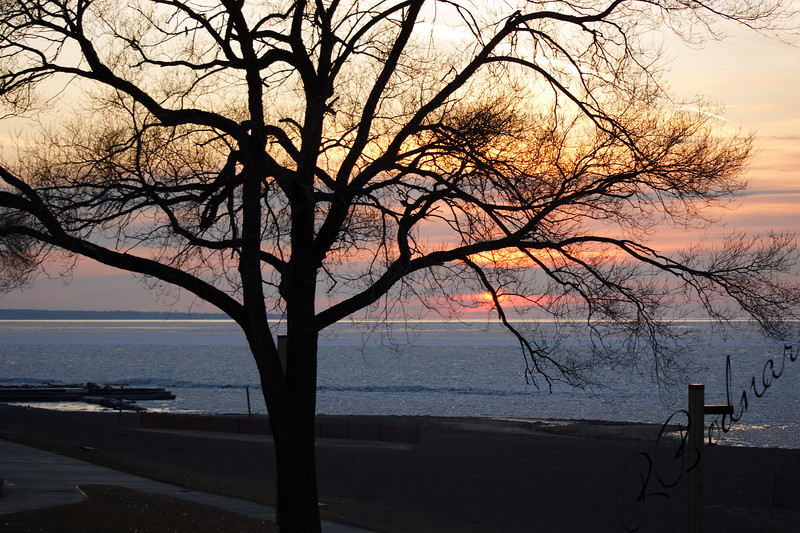 Photo By Robert Bodnar............ Lone Tree at Sunset,  Lakeview Park