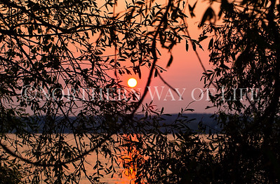 Sunset through the trees; Lake Leelanau