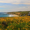2017-04-17_Crystal Cove_1.JPG<br /> <br /> Funny story - I had seen a similar photo taken by a photographer friend, Bob Okvist, but his foreground was much more spectacular with orange and yellow flowers.  So, I set out to find 'his' spot in Crystal Cove.  Well, I had to go under a wire fence with 'No Trespassing' signs all over it to get the shot.  Just as I was coming back under the fence - you guessed it - a ranger drove right past me!!!  He jumped out of his truck so fast and confronted and scolded me - all I could do was apologize profusely and assure him that I stayed on the dirt trail and did not venture into the brush because I'm too scared of snakes!!!  Busted!!!!