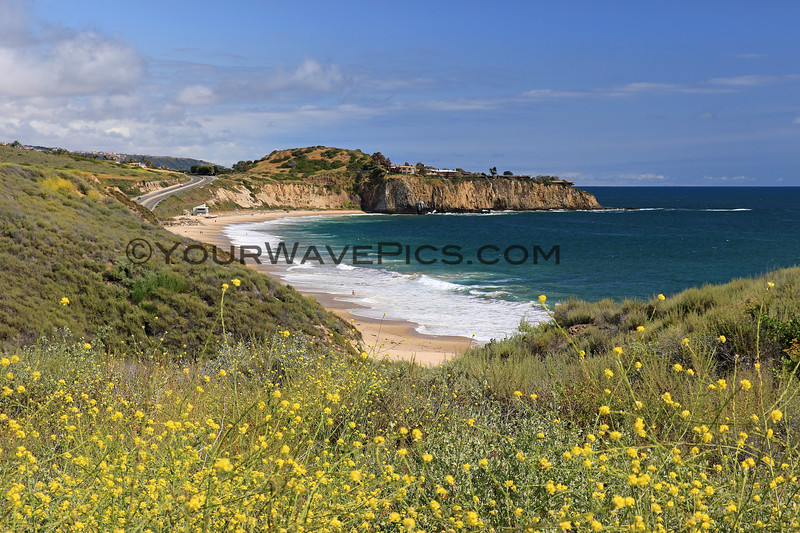 2019-05-07_Crystal Cove_Superbloom_El Moro_7.JPG