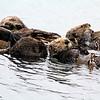 9772B_Morro Bay otter raft.JPG