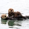 9784B_Morro Bay mama & baby otters.JPG