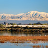 2019-12-27_Bolsa Wetlands Snow Views_6.JPG