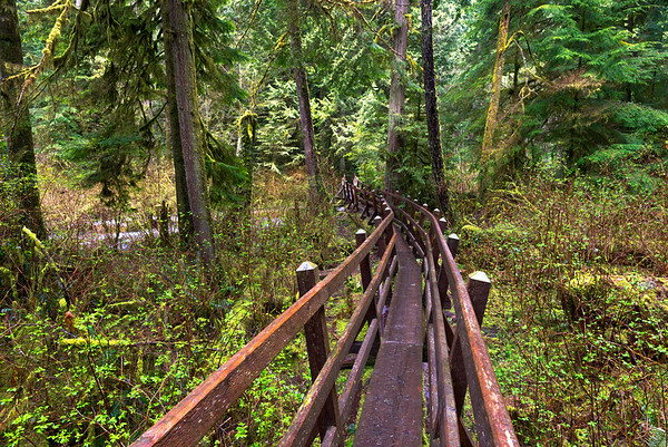 Cliff Gilker Forest Boardwalk