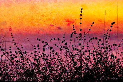 Sunset Color Burst