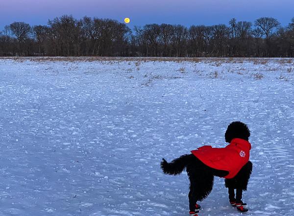 Barbeting at the super moon
