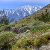 Mount San Jacinto
