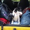 Backpacks and Monty ready to head out....precious cargo for sure!