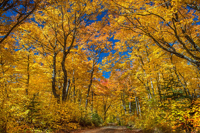 Fall Colors on Rengo Road near Grand Portage MN.