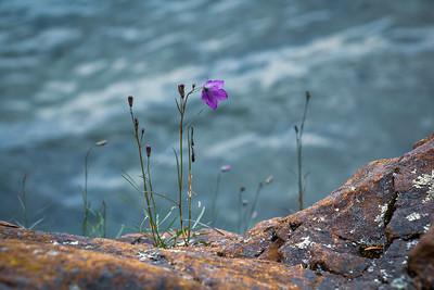 Lake Superior Purple
