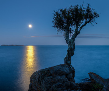 Spirit Tree and Harvest Moon--Grand Portage MN.