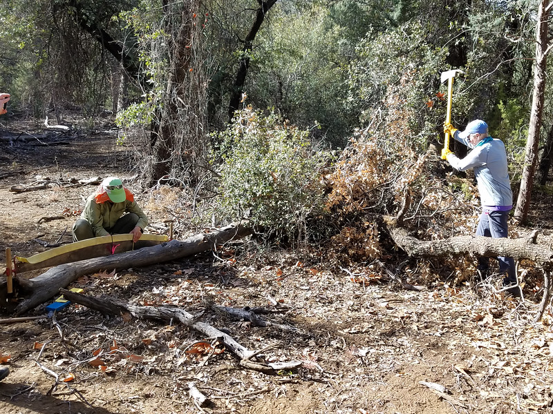 Amy preps the crosscut saw while Sue limbs back the log to make the area safe for the saw team.