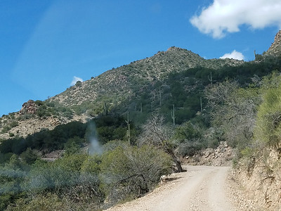 Saguaros en Route