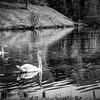 Bavarian Pond